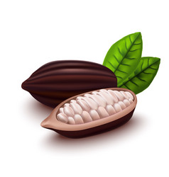 realistic 3d cocoa beans set vector image