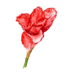 flower of gladiolus vector image vector image
