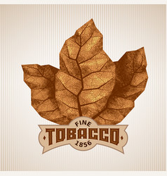 three dry tobacco leaves with label vector image