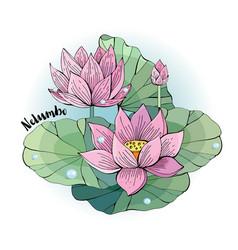 lotus flower beautiful vector image