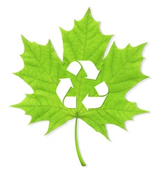 Recycle Green Leaf vector image