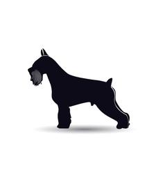 Schnauzer dog silhouette vector image