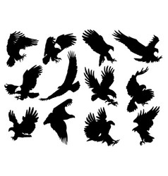 set silhouette eagles collection flying vector image