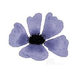 watercolor blue flower isolated on white vector image