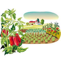 Agricultural landscape with a plant of san vector