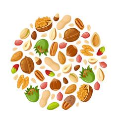 Cartoon seeds and nuts almond peanut cashew vector