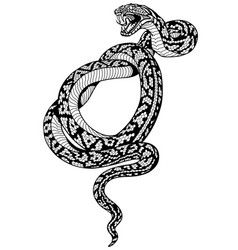 Coiled snake tattoo black and white vector