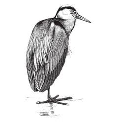 Common heron vintage vector