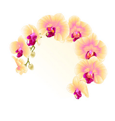 frame beautiful orchid yellow stem with flowers vector image