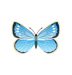 Morpho peleides blue butterfly vector
