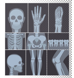 realistic x-rays shots vector image