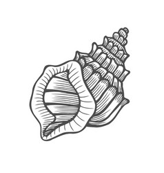 seashell nautilus sea shell vector image