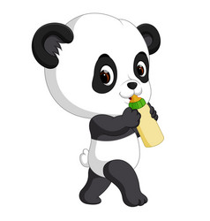 cute baby panda holding bottle vector image