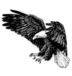 eagle 1 vector image