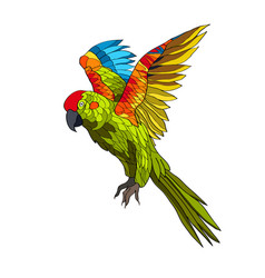 a flying parrot with yellow vector image