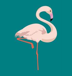 Flamingo tropical bird icon vector