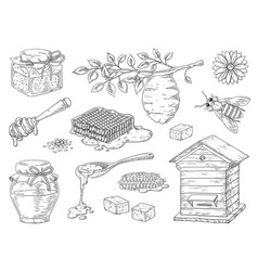 hand drawn honey vintage bee honeycomb and honey vector image