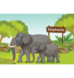 Two elephants with a wooden sign board at the back vector image
