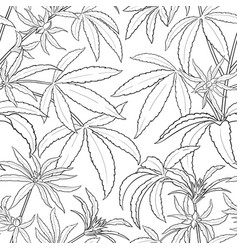 hemp plant pattern on white background vector image