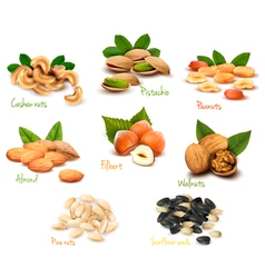 Mega collection of colorful nuts vector