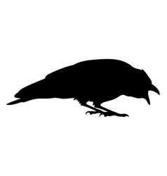Raven 005 vector