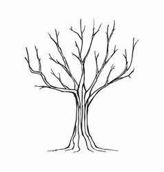 tree silhouette on white background vector image