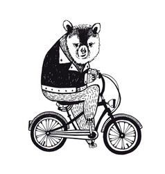 bear on the bicycle vintage on white vector image