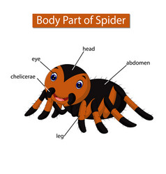 Diagram showing body part spider vector