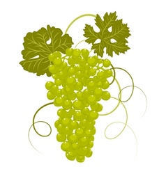 Hand-drawing grapes with leaves vector