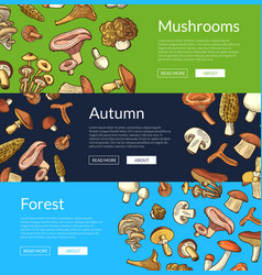 hand drawn mushrooms banners vector image
