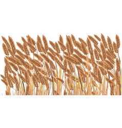 Isolated crop field vector