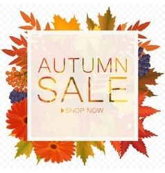 autumn sale discount banner on the transparent vector image