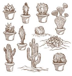 cactus plants indoor and outdoor species sketch vector image