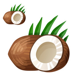 coconut detailed icon isolated on white vector image