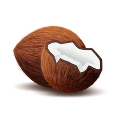 Coconut icon broken coconut isolated in white vector