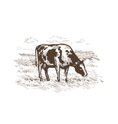 Cow grazing in the meadow rural landscape vector