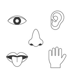 Five senses icon vector