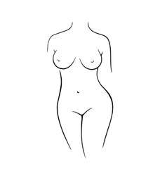 nude female figure line drawing nude female vector image