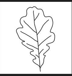Oak leaf in doodle style vector