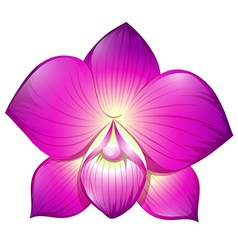 Orchid in purple color vector