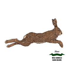forest animal hare or rabbit hand drawn colored vector image vector image