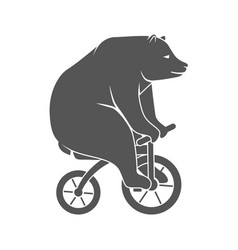 bear on bicycle minimalistic vector image