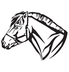 decorative portrait of norwegian fjord pony vector image