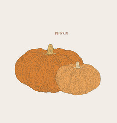 pumpkins paint hand drawn picture in cartoon vector image