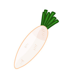 White radish isolated vector