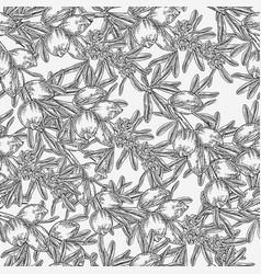 Argan tree argania seamless patern flowers nuts vector