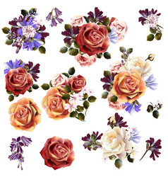 beautiful collection rose flowers vector image