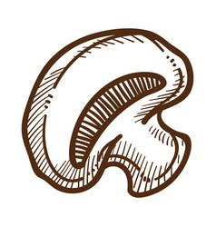 Champignon and mushroom isolated sketch organic vector