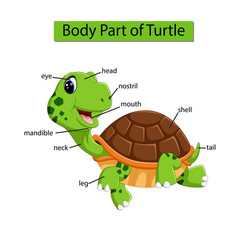 Diagram showing body part turtle vector