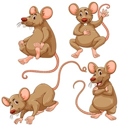 Four brown mouse on white background vector